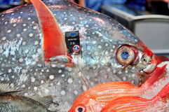 Plenty of delicious seafood are displayed beautifully at a localseafood market in Hong Kong Stock Photography