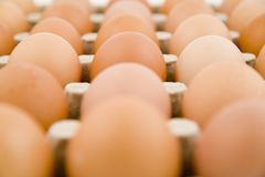 Plenty of eggs. In paper container Stock Photos