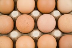 Plenty of eggs. In paper container Royalty Free Stock Image