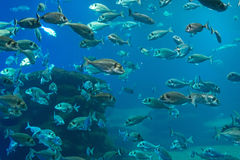Plenty of fish. Stock Photography