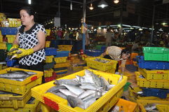 Plenty of fisheries in baskets are waiting for purchasing at the Binh Dien wholesale night seafood market, the biggest one in Ho C Royalty Free Stock Photo