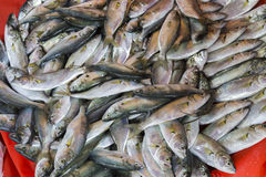 Plenty of fresh fishes in a market Royalty Free Stock Photography