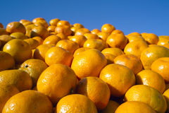 Plenty of fresh orange tangerines Royalty Free Stock Photography
