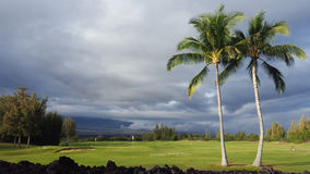 Plenty of golf balls under palms in a golf club near Waikoloa Stock Image