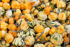 Plenty of Gourds Stock Images