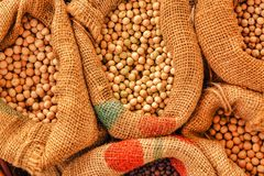 Plenty of harvested soybean in burlap sacks. Top view stock images