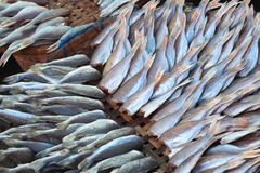 Plenty of headless fish at the market for sell Royalty Free Stock Photography