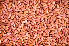 Plenty of Light Red Kidney Beans for Backgrounds Stock Image