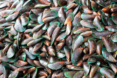 Plenty of mussels at the market for sell Royalty Free Stock Images