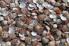 Mussels. Plenty of Mussels, Mui Ne, Vietnam stock images