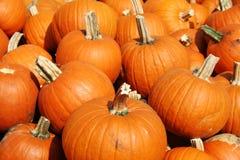 Plenty Of Pumpkins Royalty Free Stock Photos