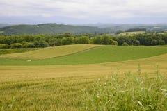 The Plenty of rice field. 2 Stock Photo