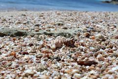 Plenty of sea shells at the beach background. Sea holiday concept royalty free stock images