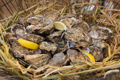 Plenty of seafood, oysters in basket Stock Photo