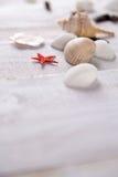 Plenty of stones and shells on the beach Royalty Free Stock Photo