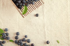 Plenty Sweet Blue Berries on Table Stock Photography