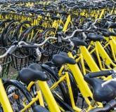 Plenty of yellow bikes Royalty Free Stock Photo