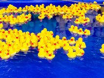 Plenty of yellow toy ducks floating in swimming pool blue water royalty free stock image