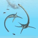 Plesiosaur Elasmosaurus Royalty Free Stock Image