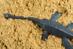 Plesiosaurus στην έννοια άμμου της ζωικής ανασκαφής Στοκ Εικόνες