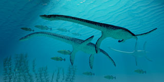 Plesiosaurus Migration Royalty Free Stock Photography