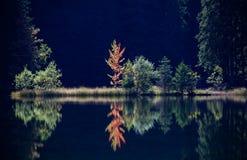Pleso του Tarn Vrbicke, Σλοβακία Στοκ εικόνα με δικαίωμα ελεύθερης χρήσης