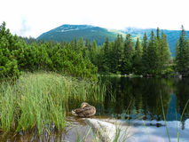 Pleso Jamske λιμνών στα βουνά Tatras Στοκ φωτογραφίες με δικαίωμα ελεύθερης χρήσης