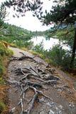 Pleso Popradske - Tarn σε υψηλό Tatras, Σλοβακία Στοκ φωτογραφίες με δικαίωμα ελεύθερης χρήσης