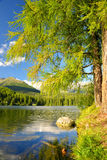 Pleso Strbske λιμνών βουνών Στοκ Φωτογραφία