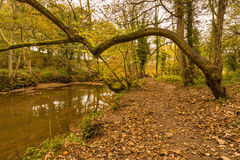 Plessey Woods riverside path Royalty Free Stock Photo