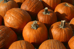 Plethora of Pumpkins. A fall classic...the pumpkin pattern Stock Photos