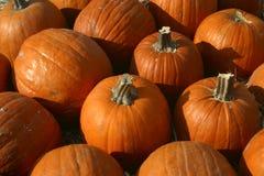 Plethora of Pumpkins Stock Photos