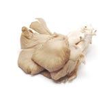 Pleurotus Στοκ Εικόνες