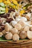Pleurotus eryngii  mushroom (king oyster mushroom) Royalty Free Stock Image