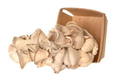 Pleurotus eryngii mushroom Stock Images