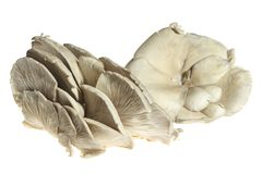 Pleurotus mushroom. Isolated on white background Royalty Free Stock Photos