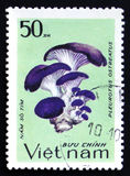 Pleurotus ostreatus, series, circa 1983. MOSCOW, RUSSIA - FEBRUARY 12, 2017: A stamp printed in Vietnam shows Pleurotus ostreatus, series, circa 1983 Stock Images