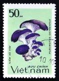 Pleurotusostreatus, serie, circa 1983 Arkivbilder