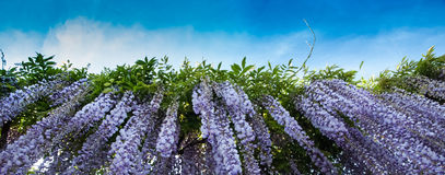 Pleuvoir des fleurs Photographie stock