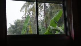 Pleuvoir la baisse sur la feuille de banane banque de vidéos