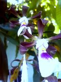 Pleuvoir la couleur et les fleurs image libre de droits