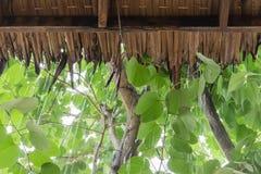 Pleuvoir le laisse tomber sur le toit le ` s fait à partir de l'herbe sèche de cogon photographie stock