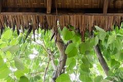 Pleuvoir le laisse tomber sur le toit le ` s fait à partir de l'herbe sèche de cogon Image stock