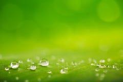 Pleuvoir les baisses au-dessus de la texture verte fraîche de feuille, fond naturel Image stock