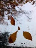 Pleuvoir les baisses avec les feuilles d'automne tombées sur le verre humide Photographie stock libre de droits