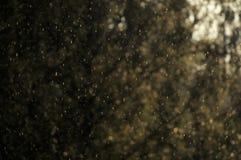 Pleuvoir les baisses tombant dans la lumière du soleil chaude avec les arbres brouillés à l'arrière-plan photo libre de droits