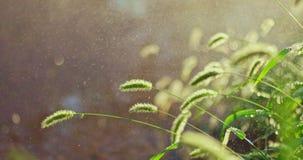 Pleuvoir lourd pendant l'été Forte pluie dans le tir de parc avec le foyer sélectif sur l'herbe banque de vidéos