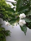 pleuvoir sur des fleurs images libres de droits