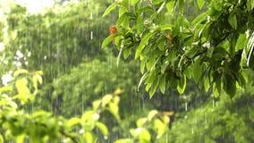 Pleuvoir sur la belle plante verte en nature banque de vidéos