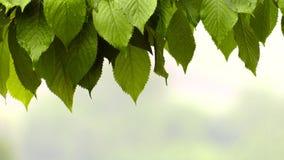 Pleuvoir sur la belle plante verte en nature clips vidéos